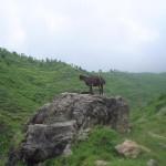 Hazara - Abbotabad Kakul  a beautiful and Greenish View