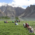 Attabad Hunza Lake - Lattest pics-3