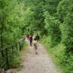 Ayubia - lush green walking trek