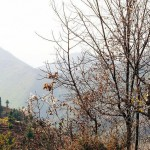 Marghzar swat - forest Trees in autumn