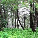 Miranjani (Nathia Gali): Galiyat, Abbotabad