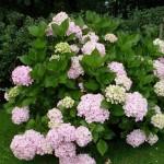 Murree with beatiful flowers