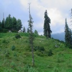 Mushkpuri Abbotabad with tall trees
