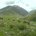 Astore Valley -  green fields with grazing animals
