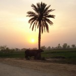 Jhang - a sun set at evening - attractive scene