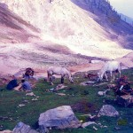 Lowari Top Chitral - Horses and Donkeys grasing at snow filled hills