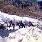 Lowari Top Chitral - Horses and Donkeys passing through the snow covered road from Dir to Chitral