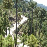 Patriata New Murree - a bird view with tall forests and snake like road
