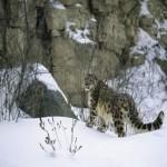 Skardu in Winter with Snow - Skardu valley, Gilgit Baltistan