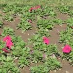 Flower beds at Jilani park or Race Course Park Lahore
