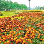 Race Course Park Lahore - beautiful flowers view with grassy grounds on Spring Festivals
