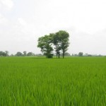 Bahawalnagar District - Greenish fields in Chishtian
