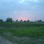Bahawalnagar District - attractive field view 2