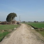 Bahawalnagar District - attractive field view 4