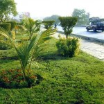 Shahrah-i-Faisal Karachi Green Belt - Spring in comming
