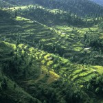 Shangla Pass - Terraces