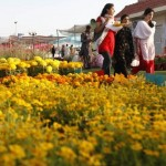 Karachi 60th Flower Festival (Spring Touches Coast)