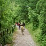 Ayubia hilly track