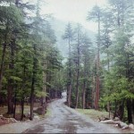 Kalam Valley Swat, Pakistan - a forest