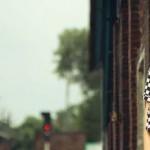 Cougar Summer Dresse 10