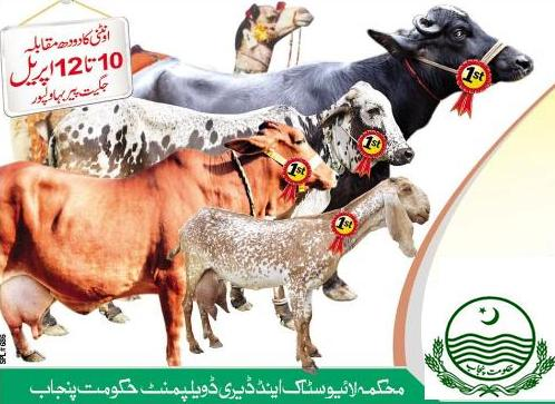 Camel Milk Competition Bahawalpur on 10-12 April, 2015
